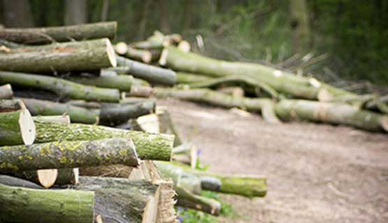 All-Seasons-Forestry-Services-Gloucestershire